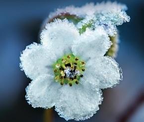 """Купить книгу """"Ежевичная зима"""", автор Сара Джио"""