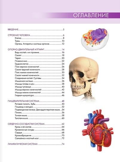 """Купить книгу """"Анатомия человека. Большой популярный атлас"""""""