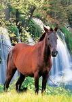 Лошадь водопад. Пазл, 500 элементов