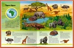 """Купить книгу """"Тварини. Ілюстрований атлас для дітей"""""""