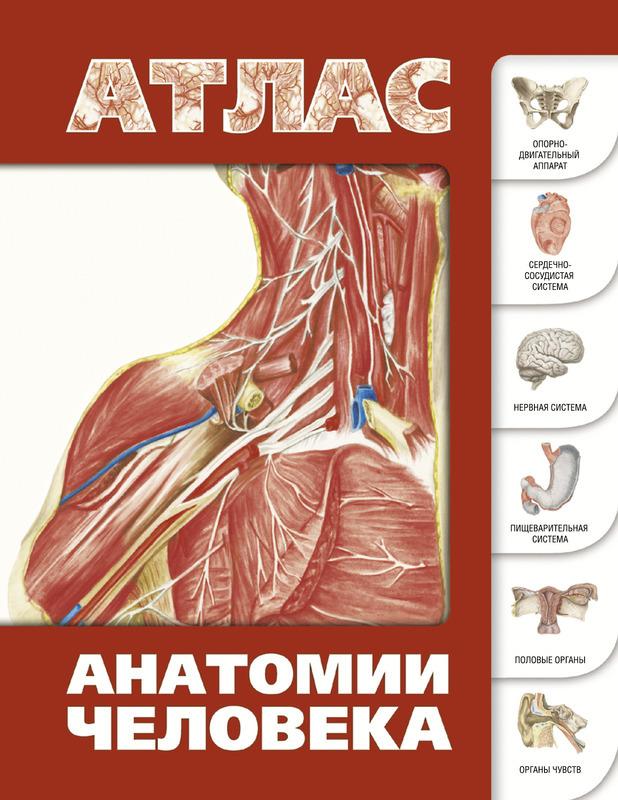 """Купить книгу """"Атлас анатомии человека"""""""