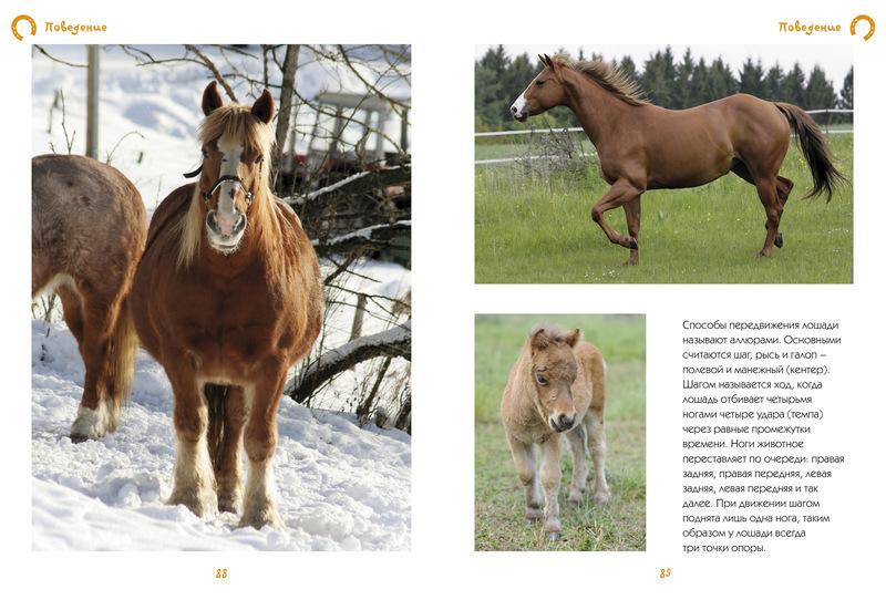 """Купить книгу """"Моя большая книга о лошадях и пони"""""""