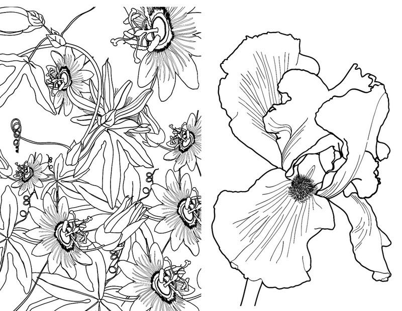 Купить книгу Зачарованный сад. Мини-раскраска-антистресс ...