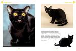 """Купить книгу """"Моя большая книга о кошках и котятах"""""""