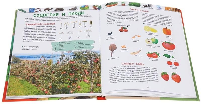 """Купить книгу """"Животный и растительный мир"""""""