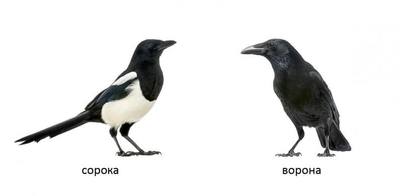 """Купить книгу """"Птахи"""""""