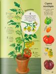 """Купить книгу """"Усе починається з насіння… як росте їжа"""""""