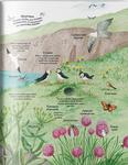 "Купить книгу ""Велика ілюстрована книга про природу"""