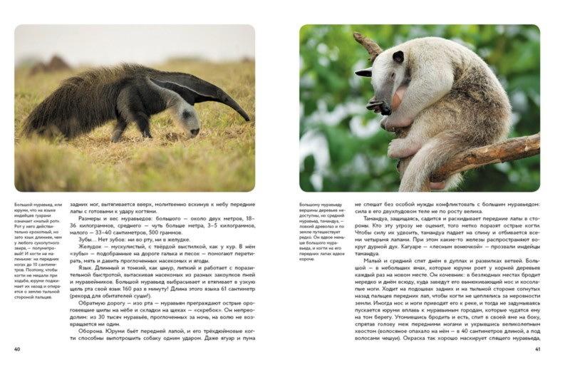 """Купить книгу """"Мир животных. Рассказы о зверях крылатых, бронированных и т.д."""""""