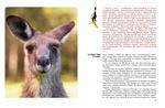 """Купить книгу """"Мир животных. Рассказы об утконосе, ехидне и т.д."""""""