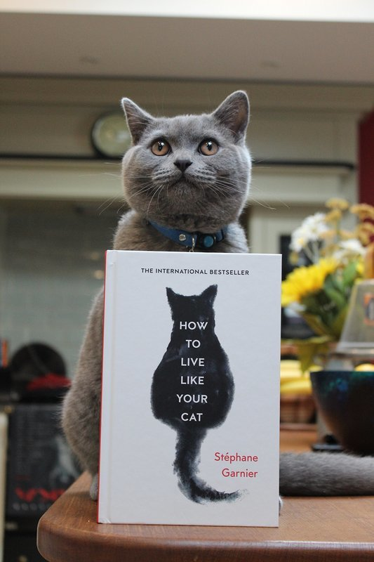 "Купить книгу ""How to Live Like Your Cat"""