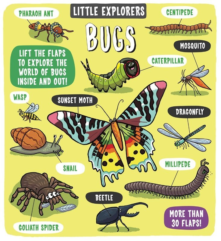 "Купить книгу ""Little Explorers: Bugs"""