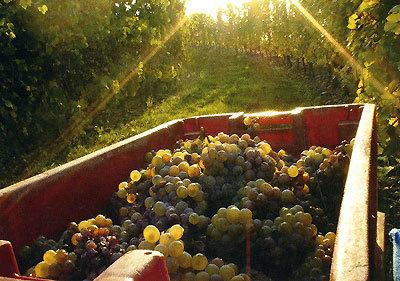 """Купить книгу """"Великие вина и лучшие винные хозяйства мира"""""""