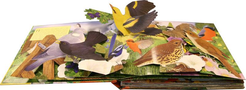 выньте шкурки картинки звери и птицы на книжных страницах рукава, козак принялся