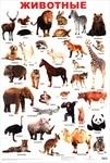Животные. Учебный плакат