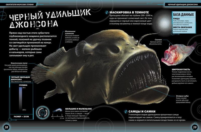 Обитатели морских глубин доклад 1166